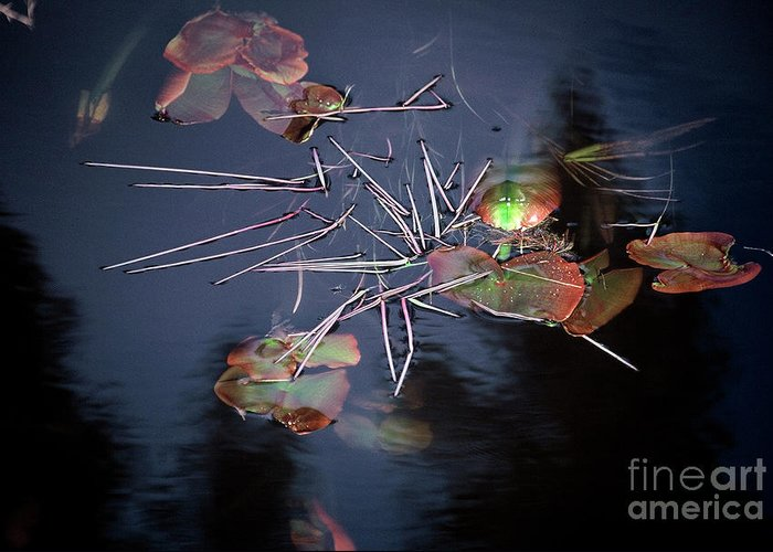 Water Greeting Card featuring the photograph Water Lily by Greg Payne