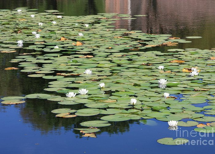 Water Greeting Card featuring the photograph Water Lily Pond by Carol Groenen