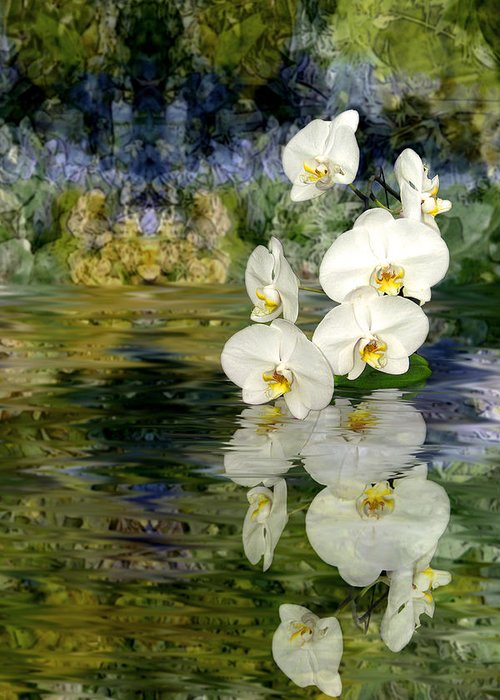 Orchid Greeting Card featuring the photograph Water Orchid by Tom Romeo