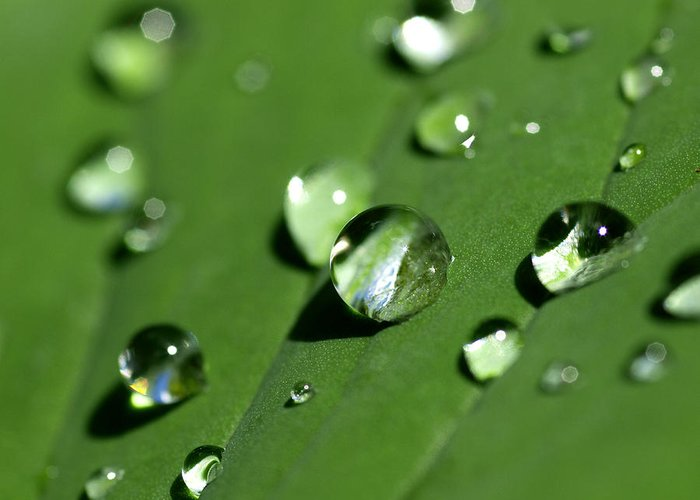 Dew Greeting Card featuring the photograph Waterdrops by Melanie Viola