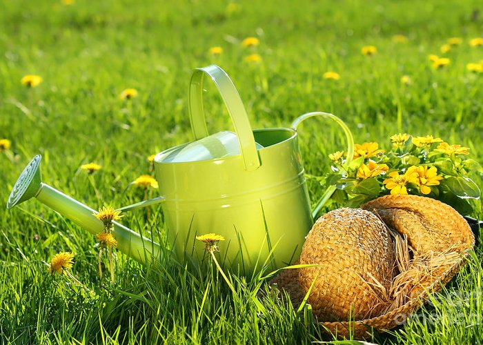 Green Greeting Card featuring the digital art Watering Can In The Grass by Sandra Cunningham