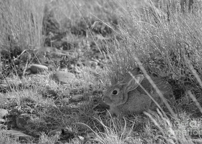 Cottontail Greeting Card featuring the photograph Watership Down by Janeen Wassink Searles