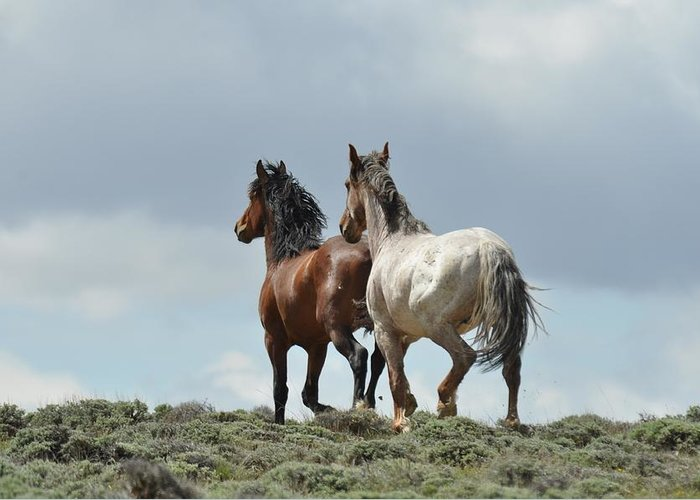 Wild Horses Greeting Card featuring the photograph We Will Be Over the Hill in a Few Seconds by Frank Madia