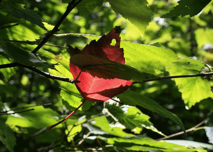 Foliage Greeting Card featuring the photograph Wealth by Alan Rutherford