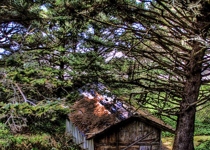 Shed Greeting Card featuring the photograph Weathered Shed by David Patterson