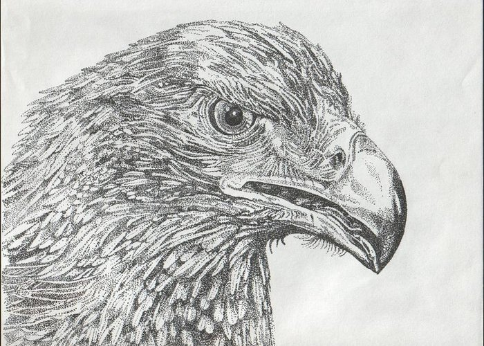 Eagle Greeting Card featuring the drawing Wedgetail Eagle by Leonie Bell