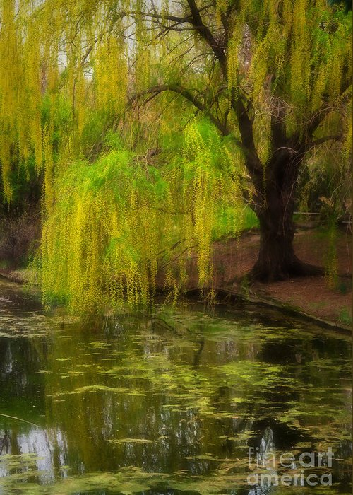 Botanica Greeting Card featuring the photograph Weeping Pond by Fred Lassmann