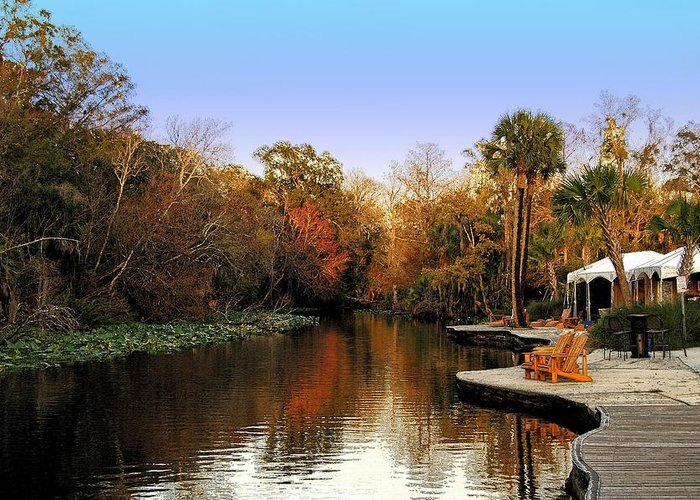 Fall Greeting Card featuring the photograph Wekiva Island by Andrew Armstrong - Mad Lab Images