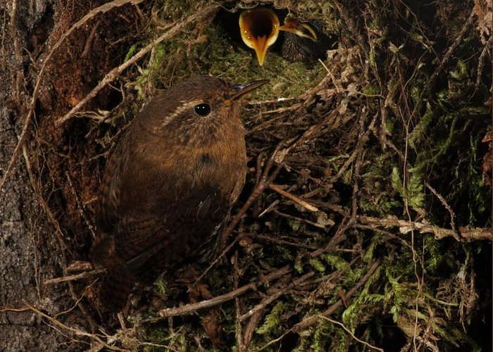 Portrait Greeting Card featuring the photograph Well Hidden Nest by Damon Calderwood