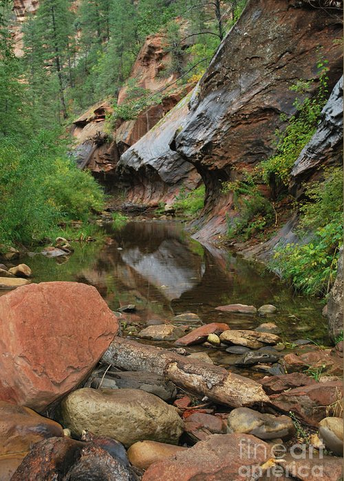West Fork Trail River And Rock Vertical Sedona Arizona Oak Creek Canyon Wall Water Tree Bush Brush Leaf Pine Reflect Reflection Greeting Card featuring the photograph West Fork Trail River And Rock Vertical by Heather Kirk