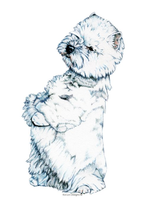 West Highland White Terrier Greeting Card featuring the drawing West Highland White Terrier, Westie by Kathleen Sepulveda