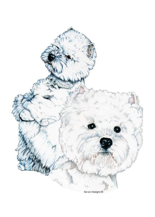 West Highland White Terrier Greeting Card featuring the drawing West Highland White Terriers by Kathleen Sepulveda