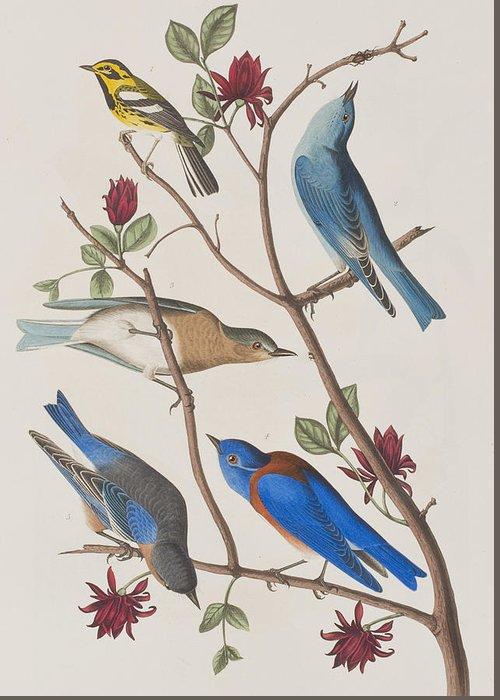 Western Blue Bird Greeting Cards