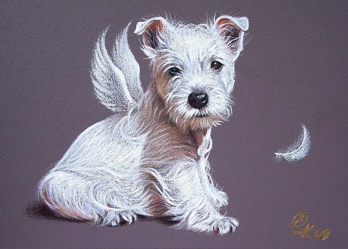 Pet Angels Greeting Cards