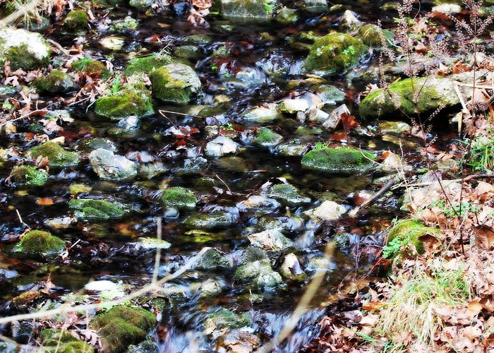 Water Greeting Card featuring the photograph Wet Rocks by Emily Spivy