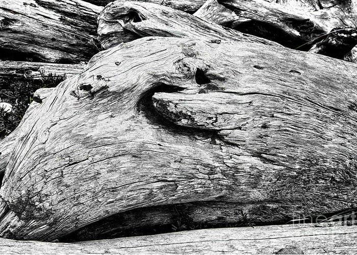 Washington State Drift Wood Greeting Card featuring the photograph Whake Driftwood by Rick Bragan