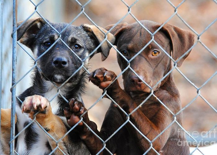 Puppies Greeting Card featuring the photograph What About Us by Jai Johnson