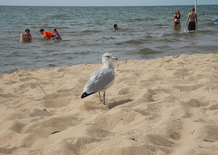 Seagull Greeting Card featuring the photograph What Are You Looking At? by Nina Kindred