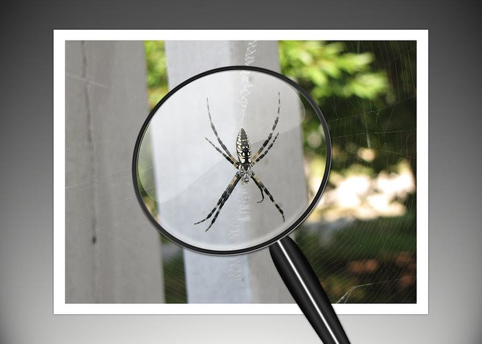 Spider Greeting Card featuring the photograph What Big Eyes You Have by Gary Adkins