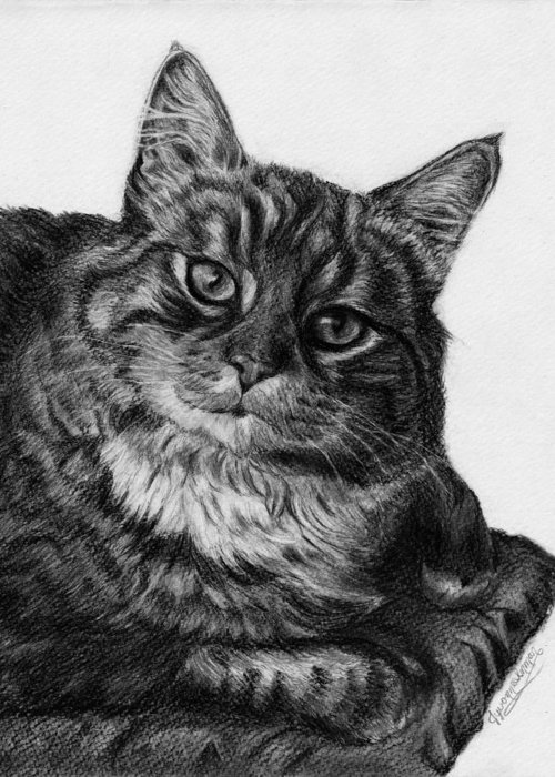 Tabby Greeting Card featuring the drawing What's For Dinner by Jyvonne Inman