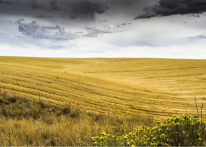 Autumn Greeting Card featuring the photograph Wheat Fields With Storm by John Trax