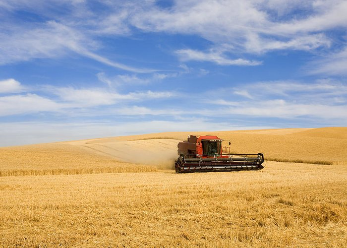 Combine Greeting Card featuring the photograph Wheat Harvest by Mike Dawson