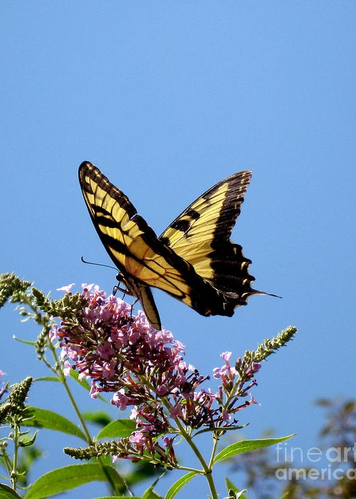 Butterfly Greeting Card featuring the photograph When Butter Flies by Terri Creasy