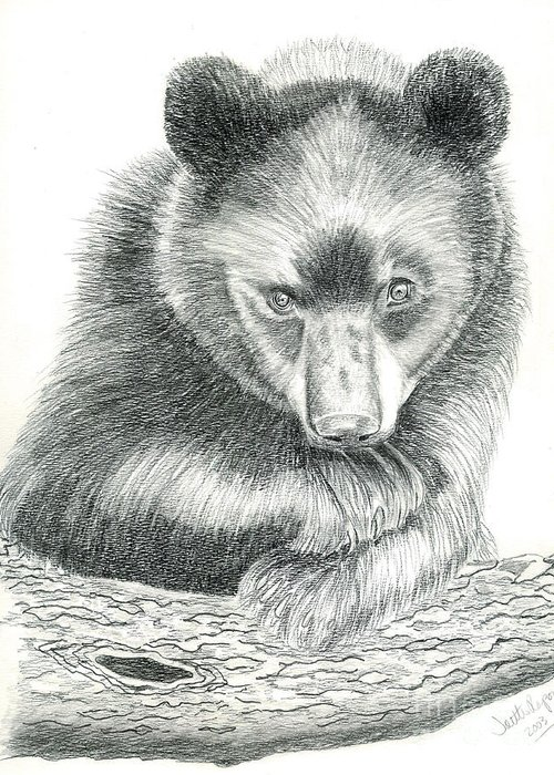 Black Bear Greeting Card featuring the drawing Where by Joette Snyder