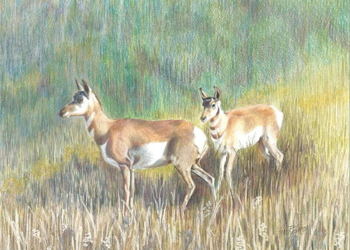 Antelope Greeting Card featuring the drawing Where The Antelope Play by Vera Rodgers
