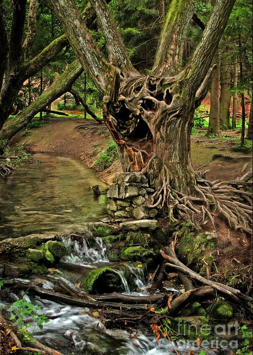Ent Greeting Card featuring the photograph Where The Ents Are by Angel Ciesniarska