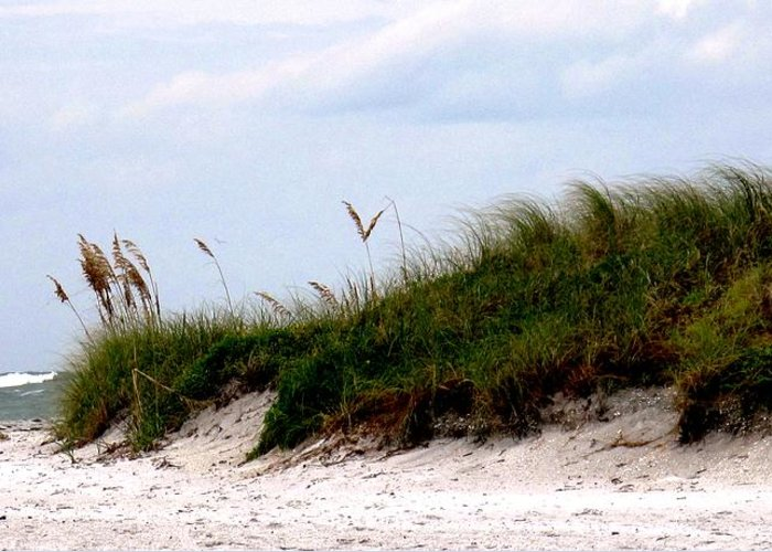 Florida Greeting Card featuring the photograph Where The Sea Wind Blows by Ian MacDonald