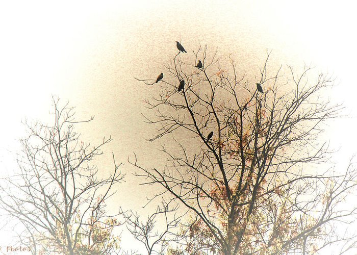 Birds Greeting Card featuring the photograph Where To Go From Here... by Bonnie Willis