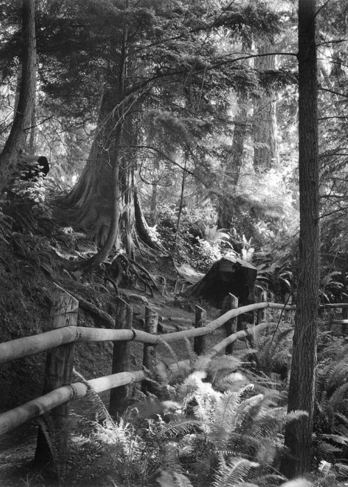 Whidbey Island Greeting Card featuring the photograph Whidbey Island Trail Head by Jim Furrer