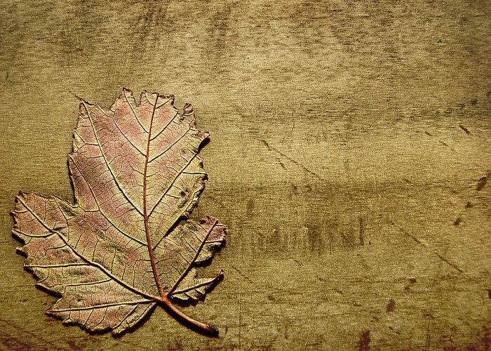 Autumn Greeting Card featuring the photograph ...while You Fall Apart by Dana DiPasquale