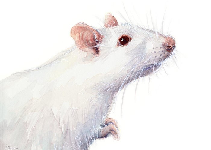 White Mouse Greeting Cards