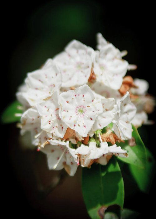 Flowers Greeting Card featuring the photograph White Blooms by Rob Narwid