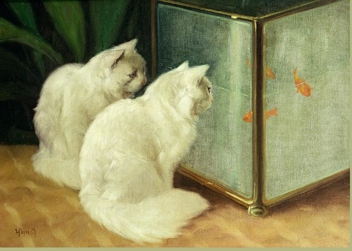 White Cats Watching Goldfish (oil On Canvas) By Arthur Heyer (1872-1931) Greeting Card featuring the painting White Cats Watching Goldfish by Arthur Heyer