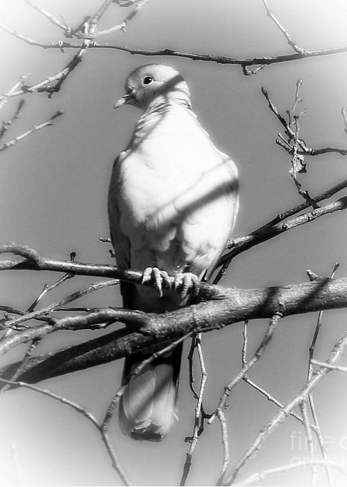 Dove Greeting Card featuring the photograph White Dove by Angela Koehler