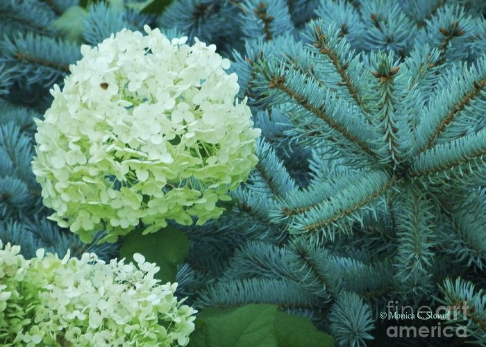 White Flowers Greeting Card featuring the photograph White Flowers W14 by Monica C Stovall