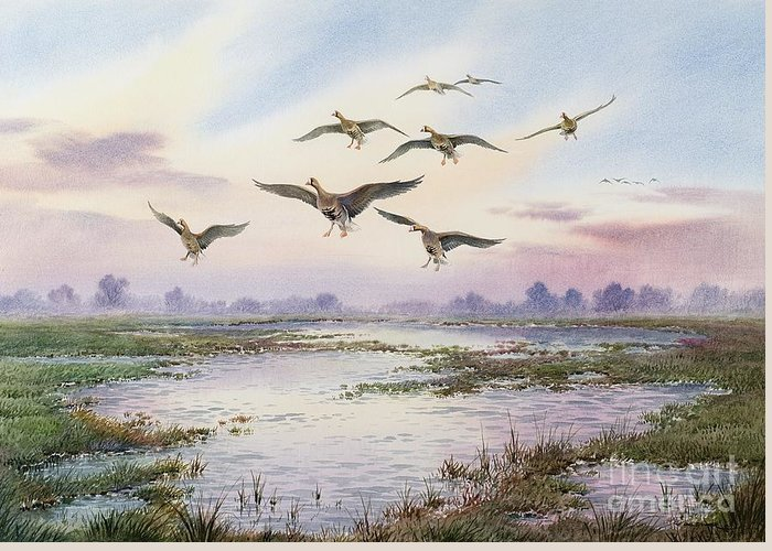 Geese; White-fronted; Marsh; River; Bird Landing; Goose; Landscape; Flying; Water; Grass; Sky; Animals Greeting Card featuring the painting White-fronted Geese Alighting by Carl Donner