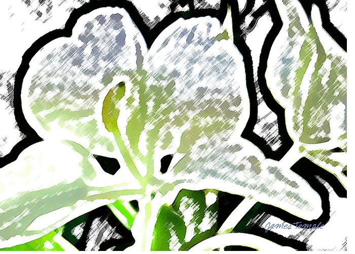 Ginger Greeting Card featuring the digital art White Ginger by James Temple