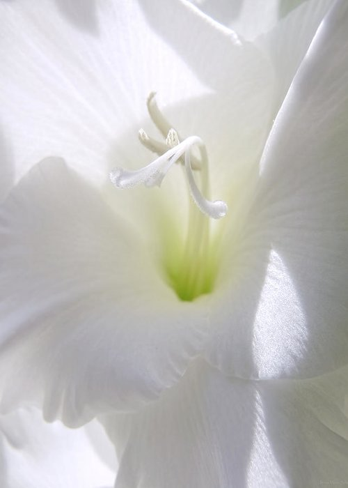 Gladiola Greeting Card featuring the photograph White Gladiola Flower Macro by Jennie Marie Schell