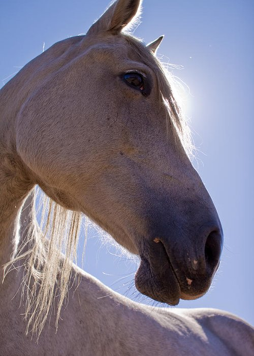 White Greeting Card featuring the photograph White Horse by Dustin K Ryan