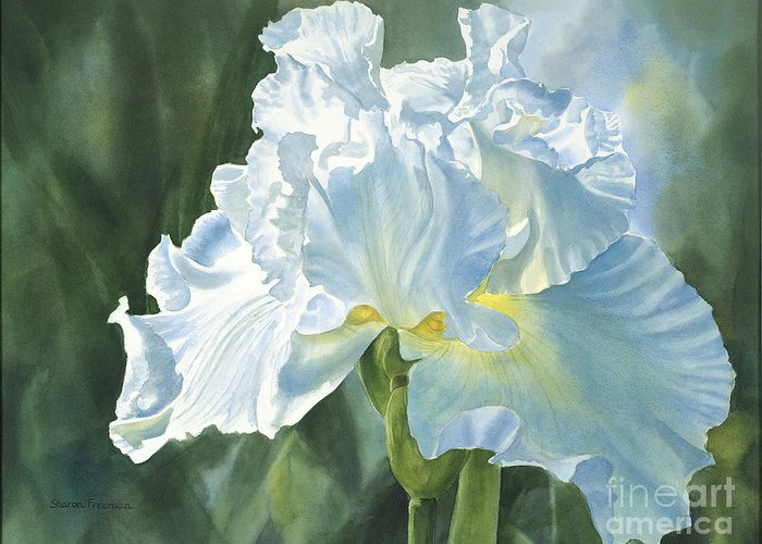 White Greeting Card featuring the painting White Iris by Sharon Freeman