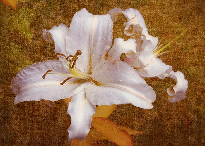 Lily Greeting Card featuring the photograph White Lilies. Time To Be Romantic by Jenny Rainbow