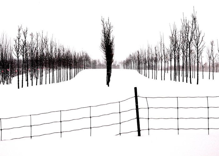 Snow Greeting Card featuring the photograph White Lines Fenced In by Russell Styles