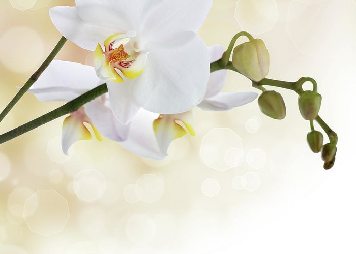 Orchid Greeting Card featuring the photograph White Orchid Flower by Pics For Merch