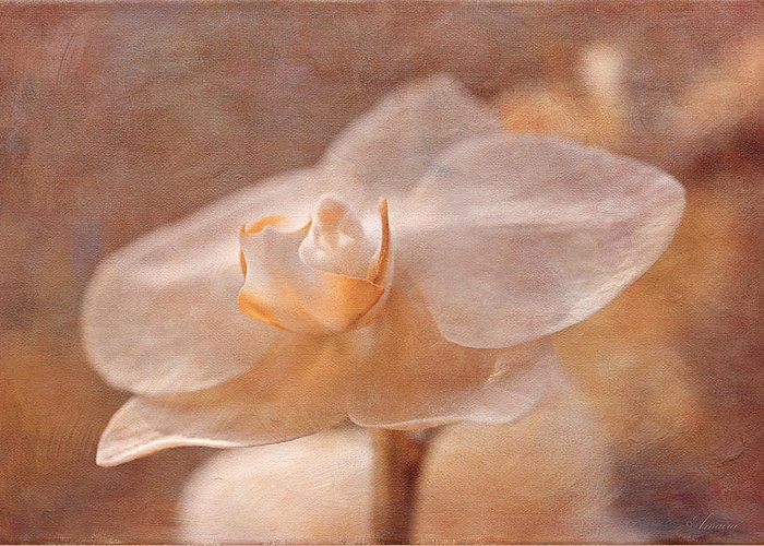Nature Greeting Card featuring the photograph White Orchid by Maria Angelica Maira