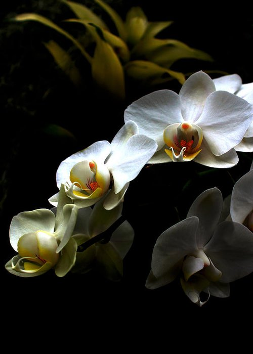 White Orchid On Black Greeting Card featuring the photograph White Orchid With Dark Background by Jasna Buncic