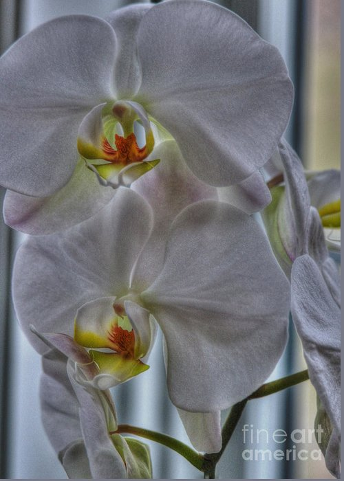 National Orchid Day Greeting Card featuring the photograph White Orchids by David Bearden
